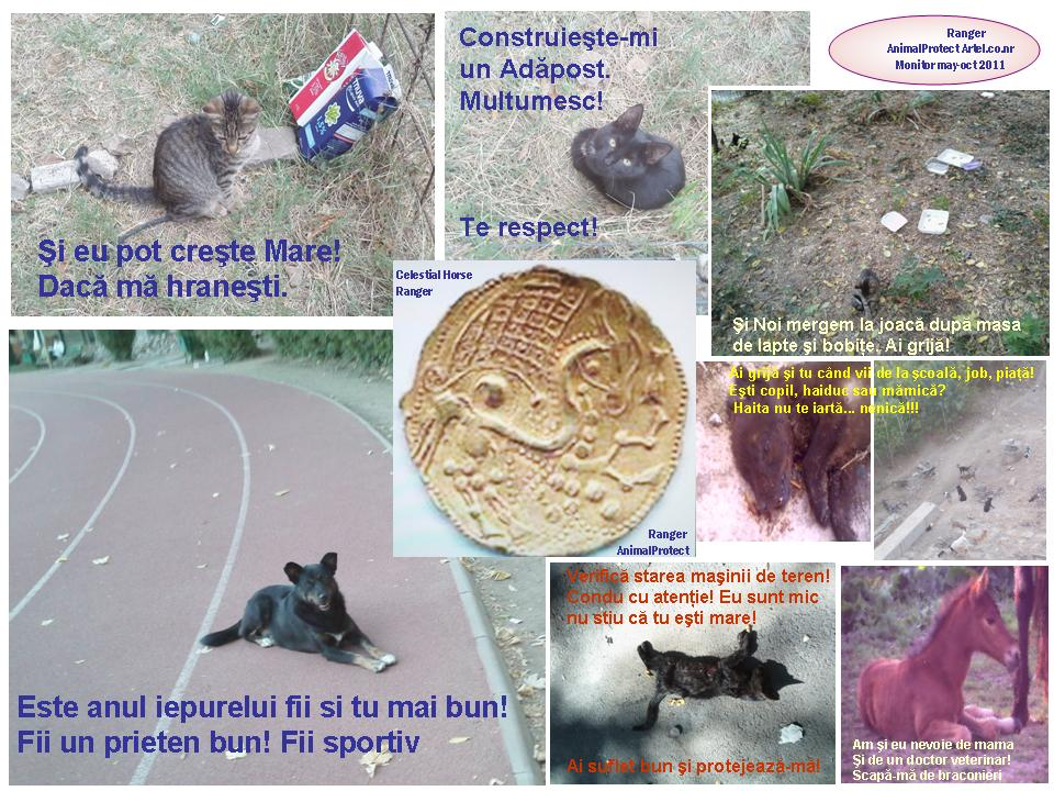 animalprotect_ranger_celestial